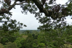 In Ecuador, the Waorani people call the ceibo tree the Tree of Life. Songs of the Trees DAVID GEORGE HASKELL