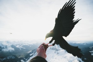 The Story Bird